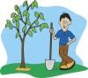 Посадить дерево